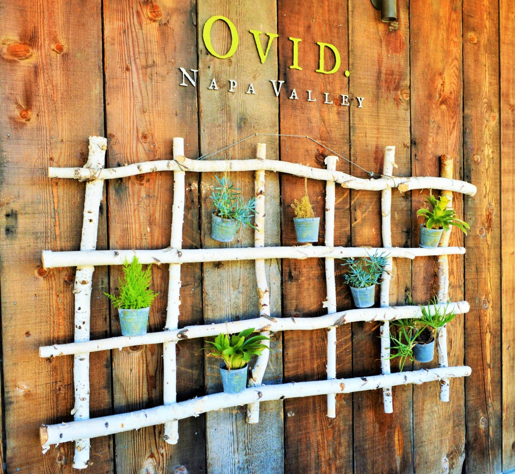 Ovid Winery