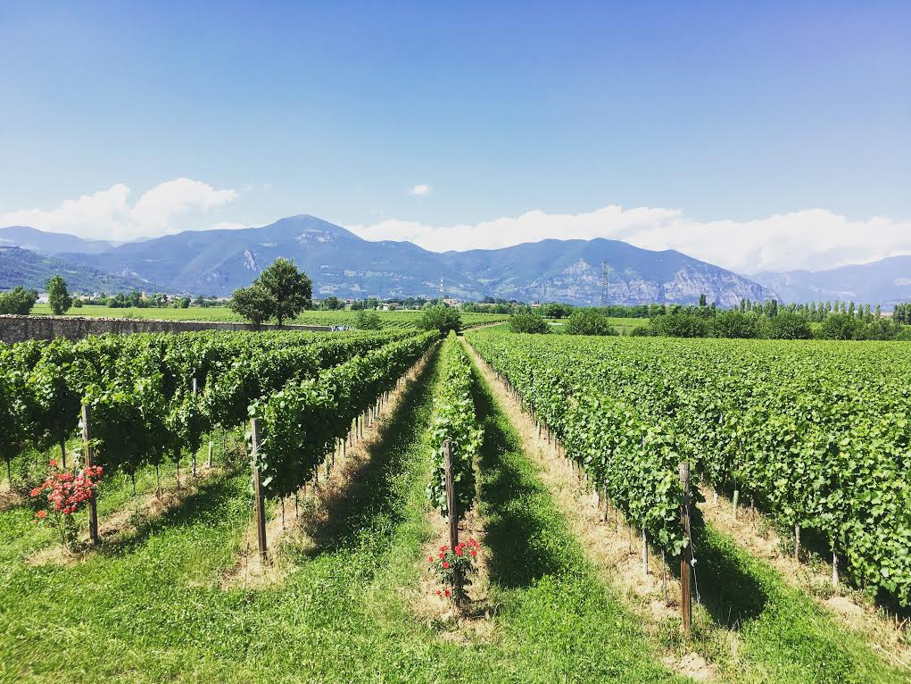 The Best Franciacorta Wines | Italy Gets Serious About Sparkling